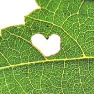 Lebe Dein Herz